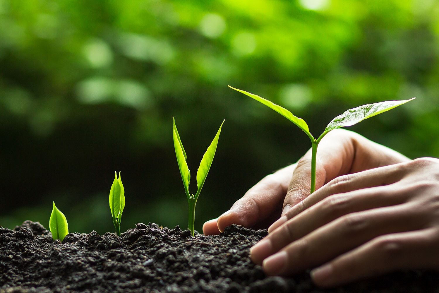 Nurturing and growing plants_Integrate and Build_Nagarro Data Offerings Page