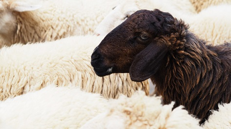 The black sheep of the agile family